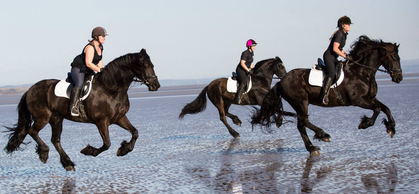 FHAGBI - Welcome to the Friesian Horse Association of Great Britain