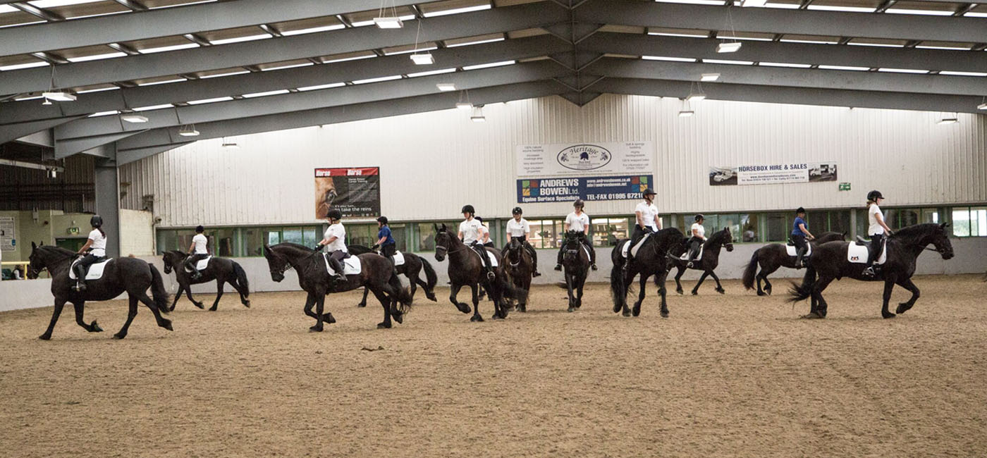 Fhagbi Welcome To The Friesian Horse Association Of Great